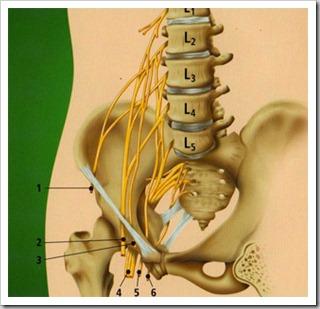 nervio femorocutaneo