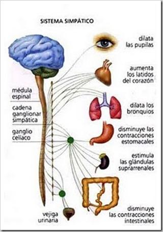 desorden sistema nervioso simpatico