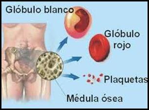 transplantedemedulaosea_thumb.jpg