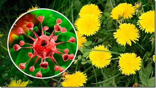 Descubre la Planta 100 veces mas poderosa que Quimioterapia
