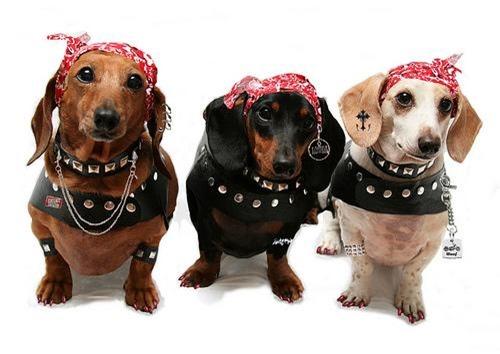 salud de tus perros